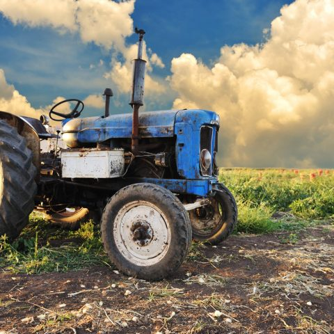 5 Fun Farm Activities to Try This Year